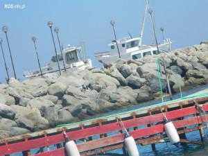 Port w Kardamenie